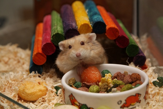 Hamster's birthday party