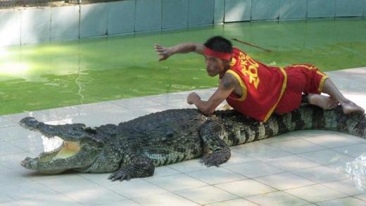 On top of the crocodile