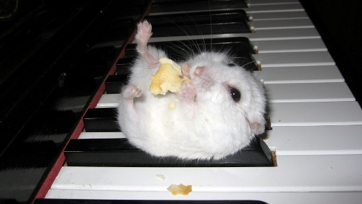 Cute hamster on the piano