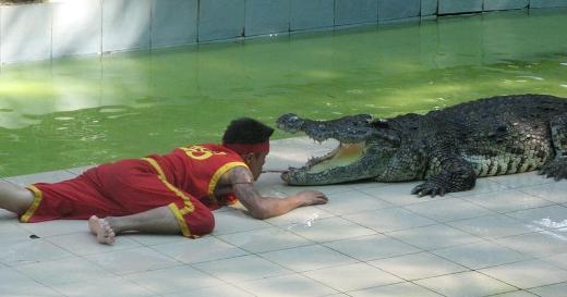 Head between crocodiles jaws