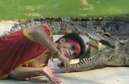 Head into crocodile mouth