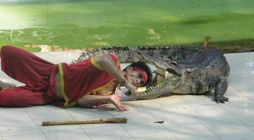 Head into crocodiles mouth
