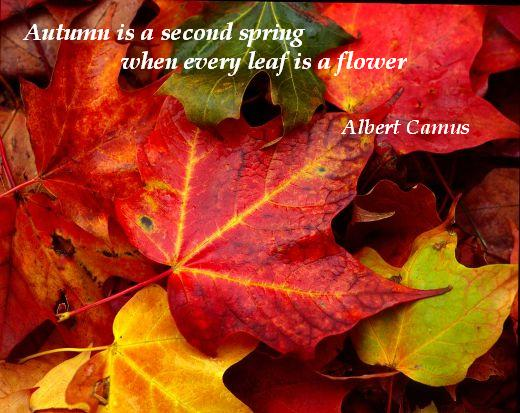 Our Funny Planet autumn quote  Our Funny Planet