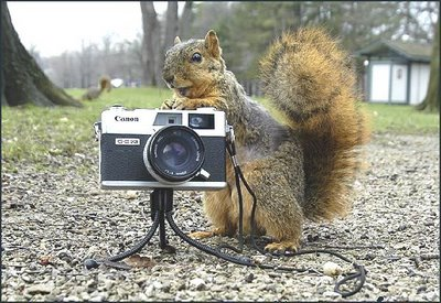 Squirrel and photo camera