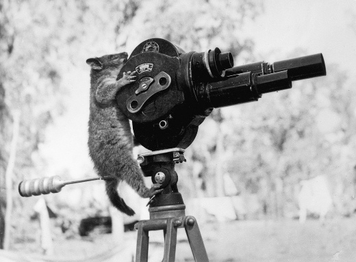 Opossum with video camera
