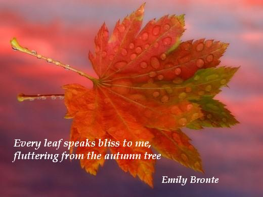 Every leaf speaks bliss to me, fluttering from the autumn tree. (Emily Bronte)
