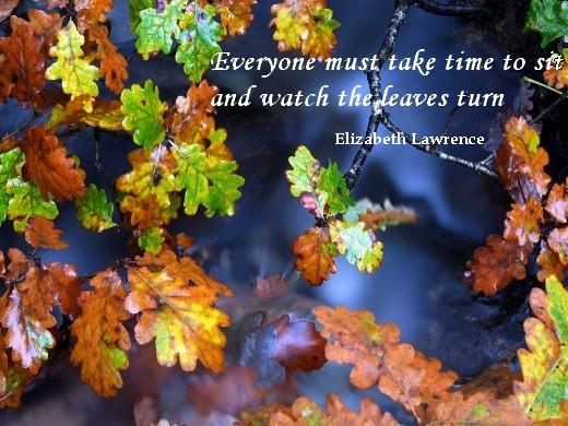Everyone must take time to sit and watch the leaves turn.  (Elizabeth Lawrence)