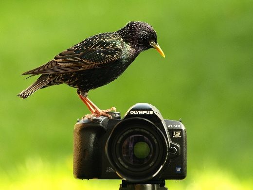 Bird and photo camera