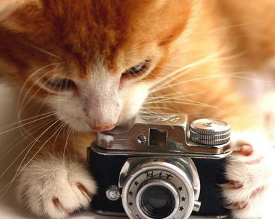 Cat with photo camera