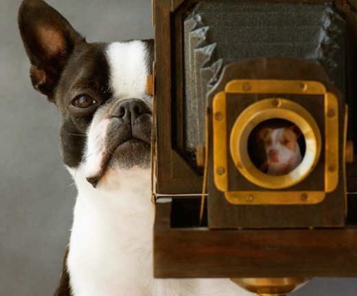 Dog and photo camera