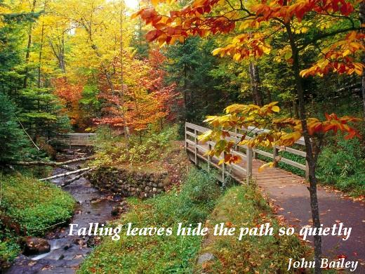Falling leaves hide the path so quietly. (John Bailey)