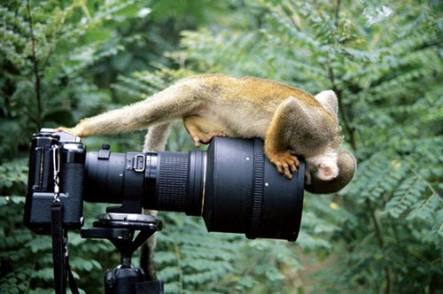 Monkey and photo camera