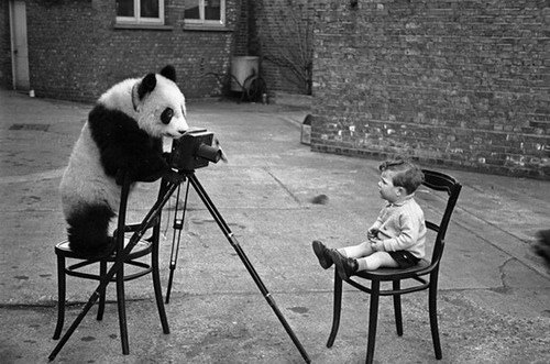 Panda with photo camera