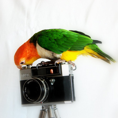 Parrot and photo camera