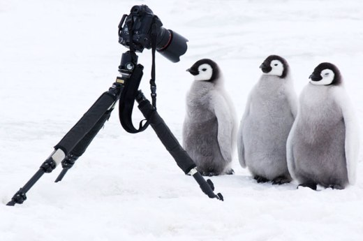 Penguins and photo camera