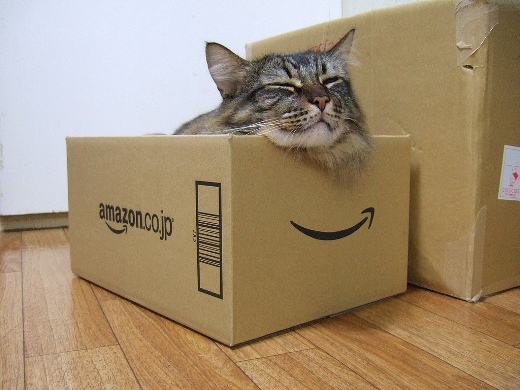 Amazon box cat