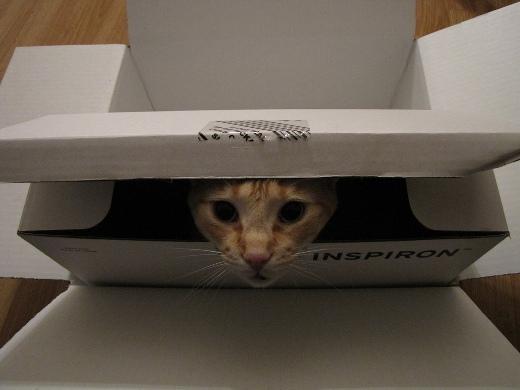 Cat boxed