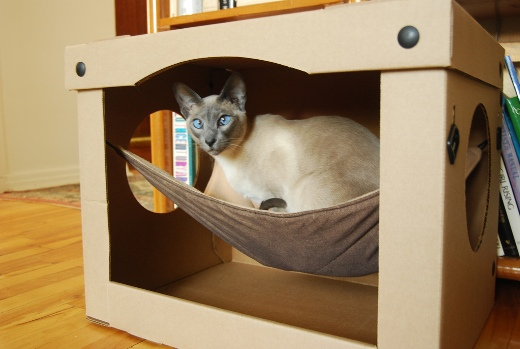 Cat house in a box