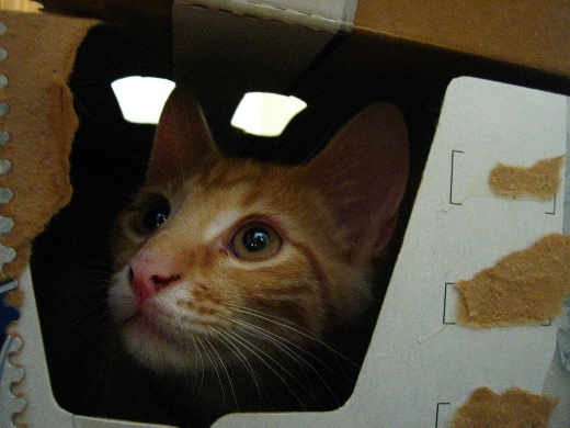 Cat inside a box