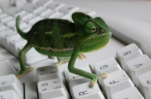 Green chameleon on the keyboard