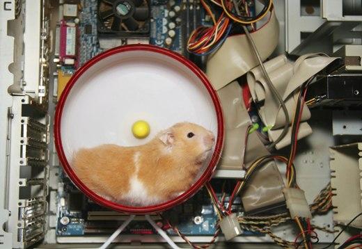 Hamster inside computer