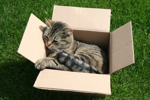 Nice cat in a box