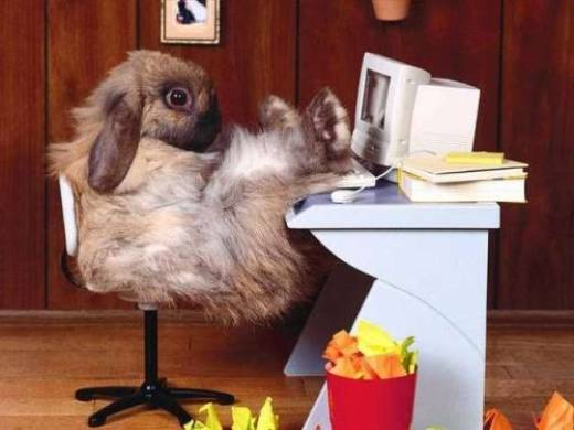 Office bunny