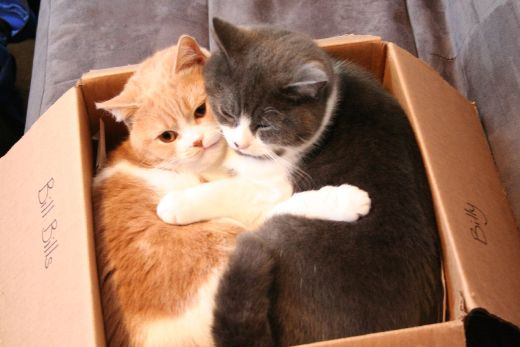Two cats in the box