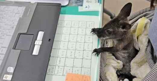 Cute animal with computer