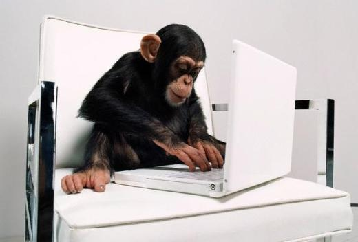 Chimpanzee with laptop