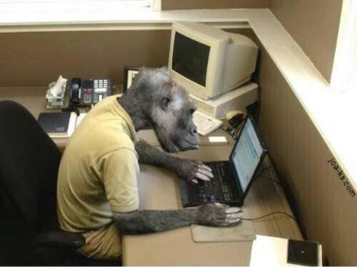 Computer monkey at work