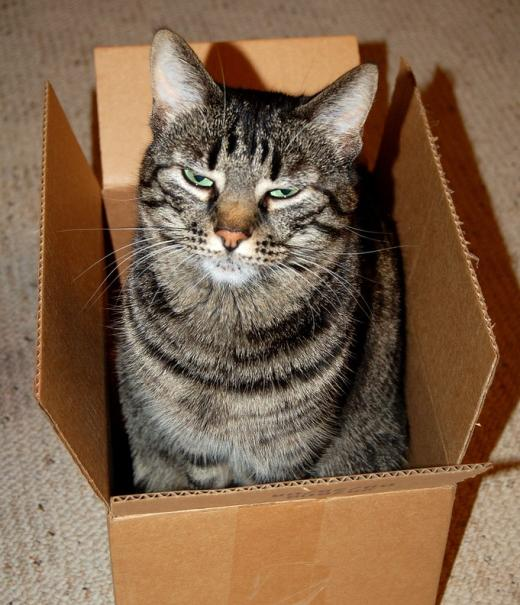 Cool cat in a box
