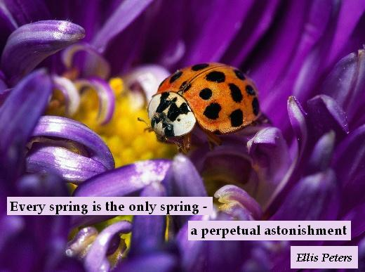 Every spring is the only spring - a perpetual astonishment.  - Ellis Peters