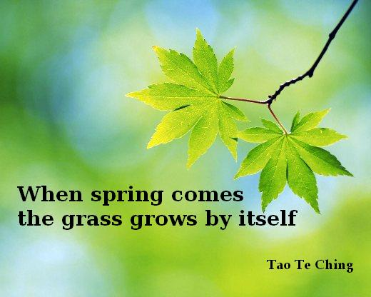 When spring comes the grass grows by itself - Tao Te Ching